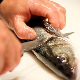 fishacademy